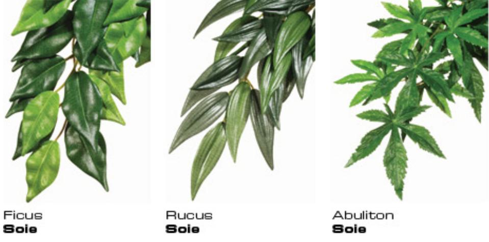 Plantes Suspendre Ficus
