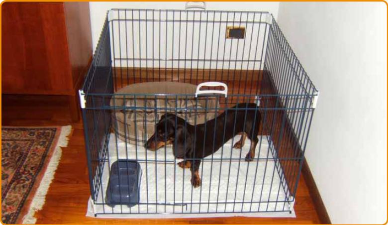 Le parc/enclos à chiot Dogtraining