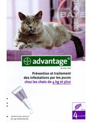 antiparasitaires puces et tiques quand votre chat a des puces. Black Bedroom Furniture Sets. Home Design Ideas