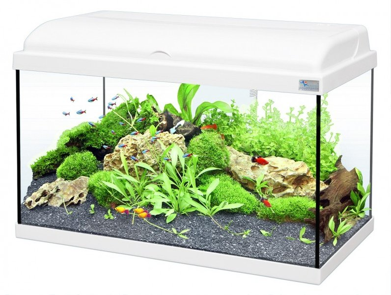 aquarium aquadream 54 litres blanc. Black Bedroom Furniture Sets. Home Design Ideas