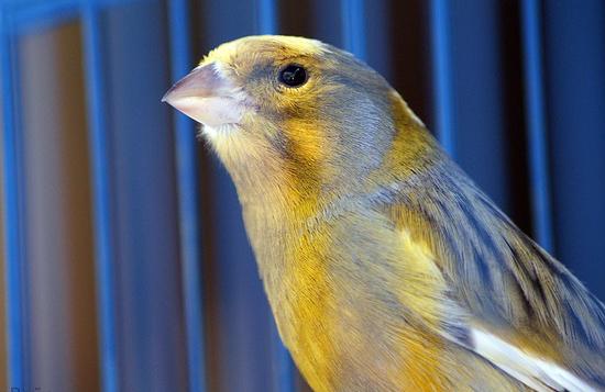 Animalerie en ligne oiseaux